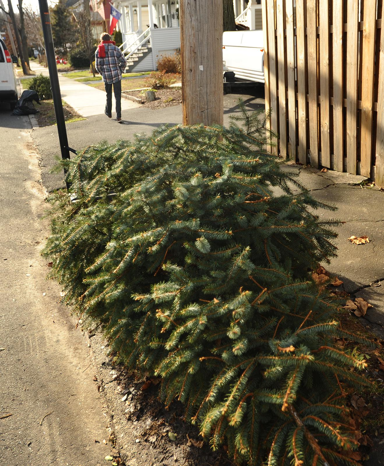 Local Christmas Trees: Christmas Trees To Be Collected In Redding