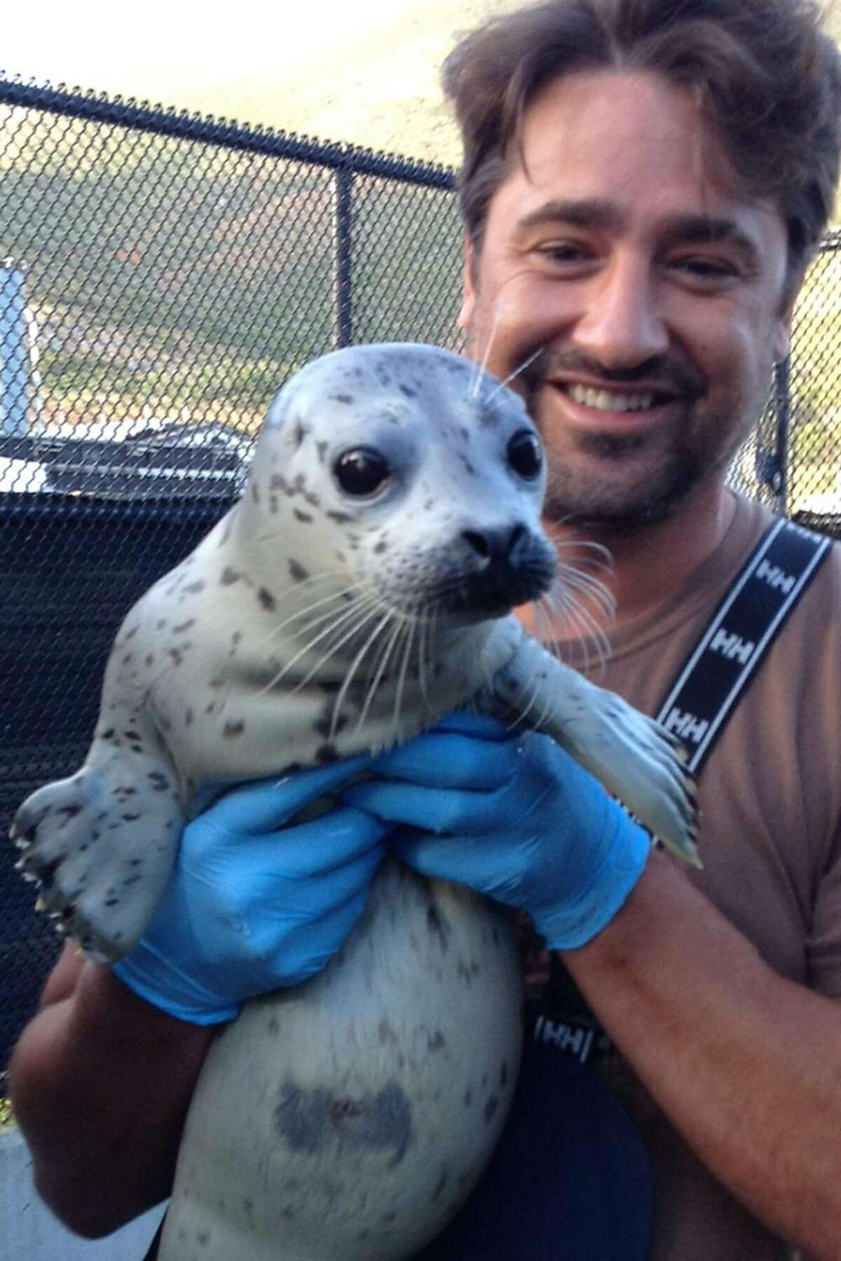 Capt. Glenn Williams helped rescued this baby harbor seal after finding it stranded and malnourished on some rocks in Bodega Bay in March 2019. The Marine Mammal Center volunteer captains the Osprey ferry - which operates from San Francisco to Berkeley - and on Dec. 20 he rescued an older man who had fallen off his sailboat.
