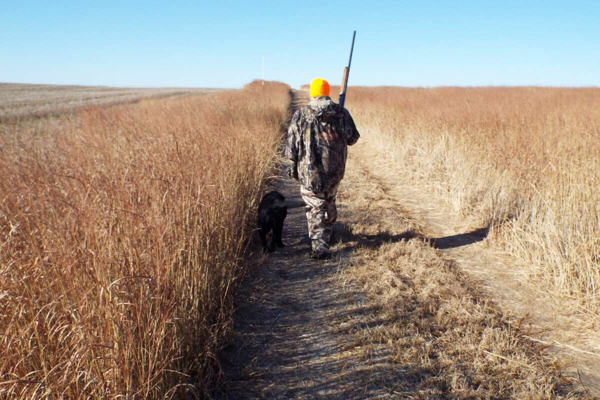Kansas provided a wide-open pheasant hunting experience and a shorter drive for Texas hunters compared to destinations like the Dakotas. (Photo by Will Wyatt/Special to the Chronicle).