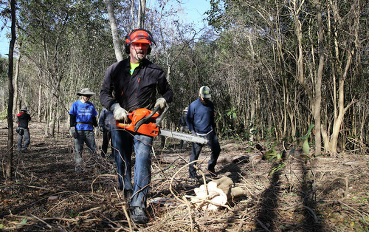 Volunteer Tom Willems (center) uses his chainsaw to cut away the base of a ligustrum tree as he joins others to work on clearing invasive plants, trees and debris at the historic Headwaters Sanctuary near the University of the Incarnate Word on Saturday, Jan. 4, 2020. A group of dedicated naturalists gathered in the morning and gradually cleared away non-native vegetation such as ligustrum that choke out native trees like live oak along with 53-acre sanctuary site located on the grounds of UIW. The sanctuary is the site of the Blue Hole or also known as Yanaguana Springs which is believed to be the origin spring for the San Antonio River. The sanctuary is overseen by the Sisters of Charity of the Incarnate Word.