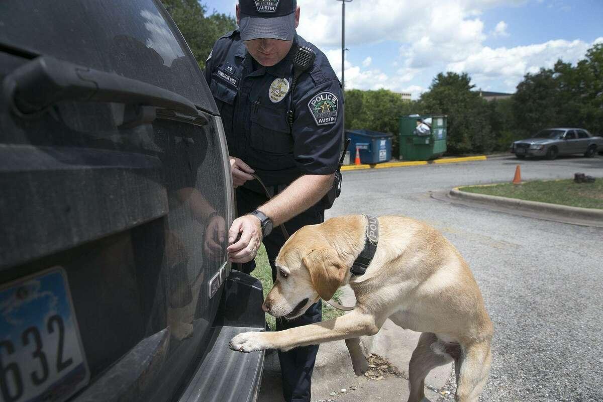 Austin Police Officer Clint Hamilton runs through a drug search demonstration with Raggio, a labrador with the APD K9 unit, on June 6, 2017, in Austin, Texas. (Deborah Cannon/Austin American-Statesman/TNS)