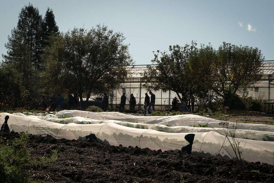 Arboriculture students walk past a greenhouse at Santa Rosa Junior College's Shone Farm in Forestville, Calif., on Sunday, December 15, 2019. Photo: Sarahbeth Maney / Special To The Chronicle