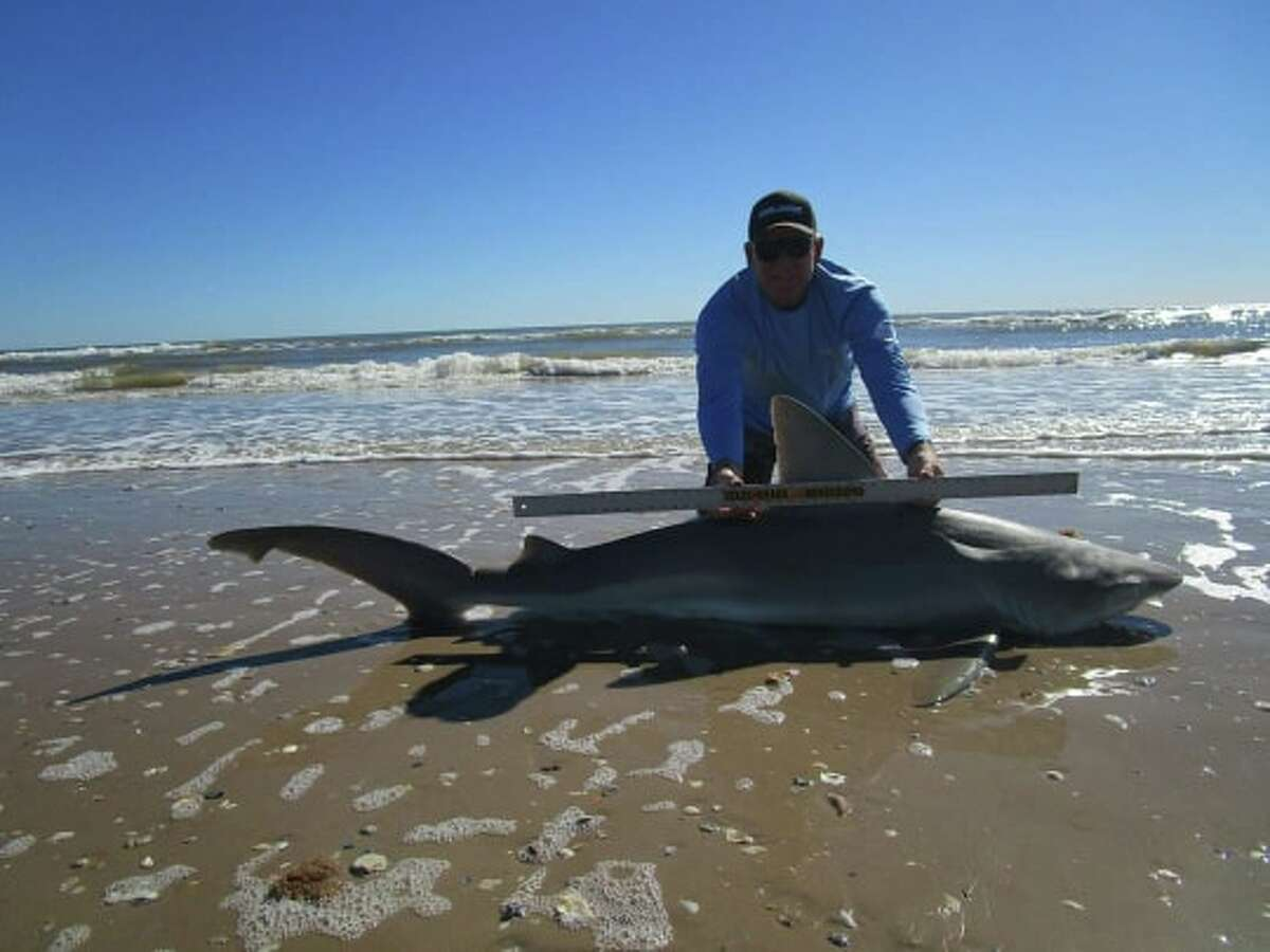 Ron Richmond caught a 7-foot-1-inch sandbar shark on Dec. 30 while out at Matagorda Bay, which is about 80 miles north of Corpus Christi.
