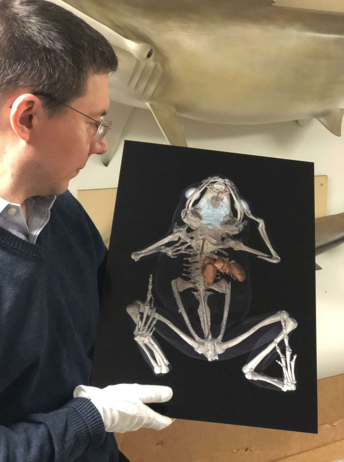Daniel Ksepka, Curator of Science, with a CT scan rendering of a miniature frog, revealing an ant inside its digestive tract.
