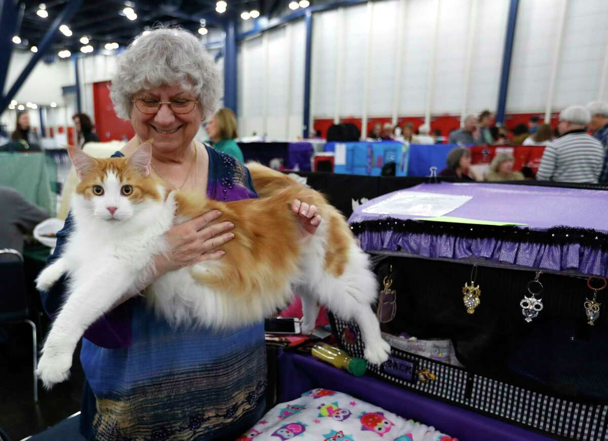 The annual Houston Cat Club Charity Cat Show at the George R. Brown Convention Center.