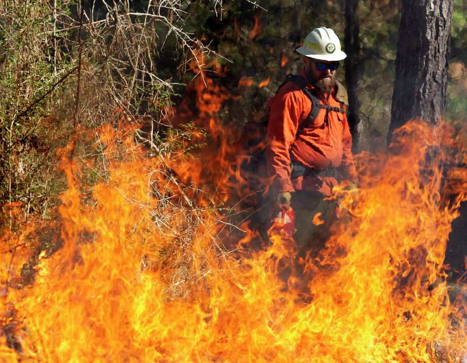 Jeff LaBlanc assists in a prescribed burn at Jones State Park, Tuesday, Jan. 7, 2020, in Conroe. The control burn reduce vegetation and potential for devastating wildlife and restore forest ecological habitat for the endangered Red-cockaded woodpecker. Photo: Jason Fochtman, Houston Chronicle / Staff Photographer / Houston Chronicle © 2020