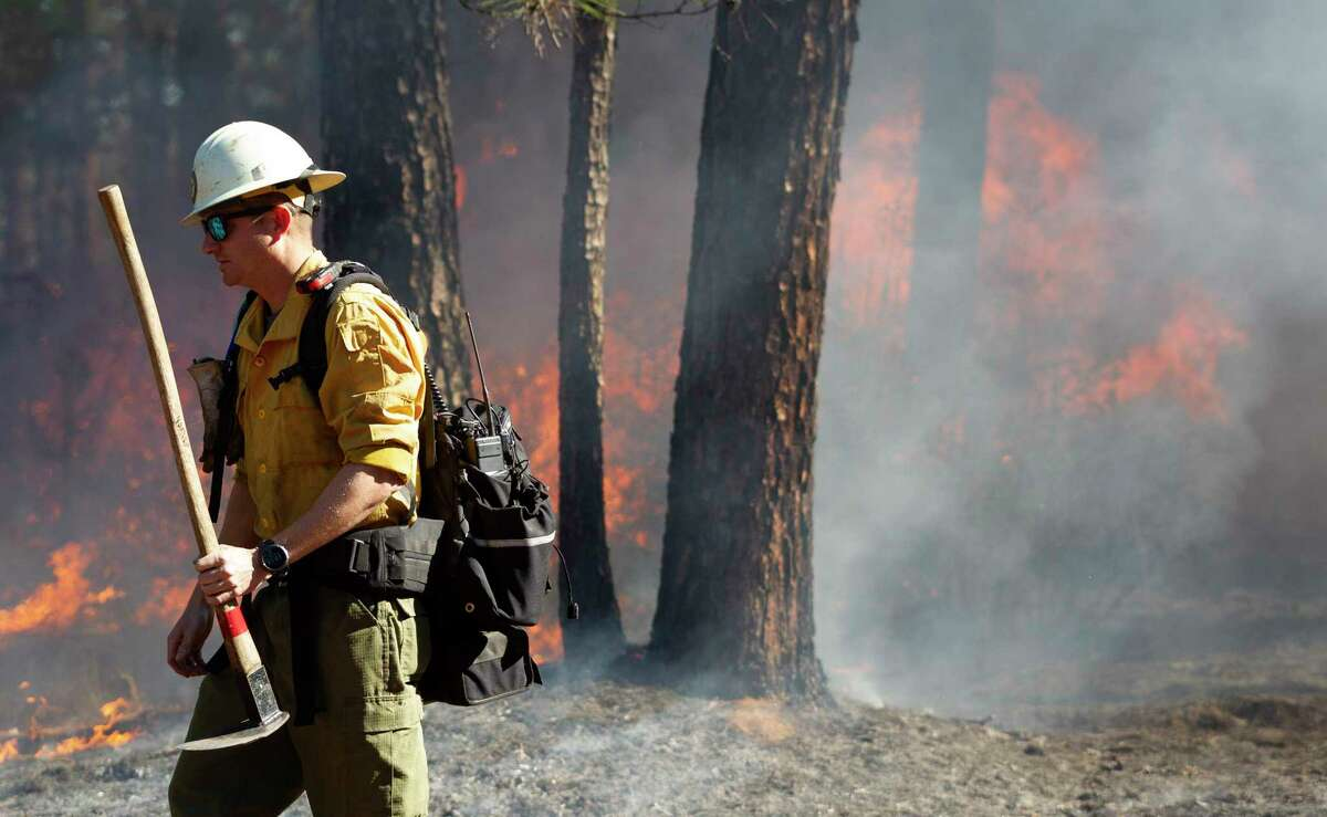 Resources Specialist Chaz Sanson helps monitor the start of a prescribed burn at Jones State Park, Tuesday, Jan. 7, 2020, in Conroe. The control burn reduce vegetation and potential for devastating wildlife and restore forest ecological habitat for the endangered Red-cockaded woodpecker.