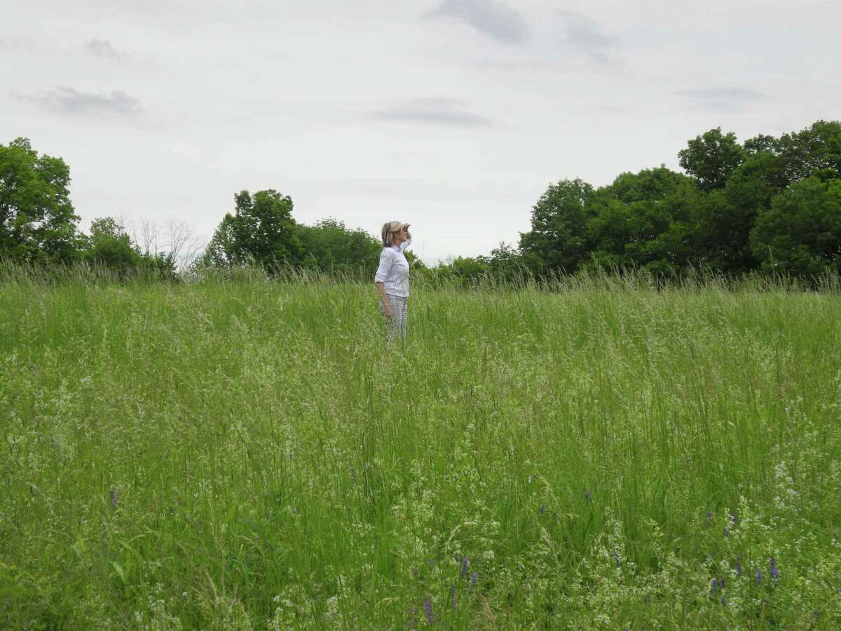 Wilton Conservation Land Trust Executive Director Donna Merrill surveys the meadow at 183 Ridgefield Road last summer.