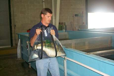 TFFC hatchery manager Tony Owens has spent of most of his TPWD career acting as a caretaker to Toyota ShareLunkers.