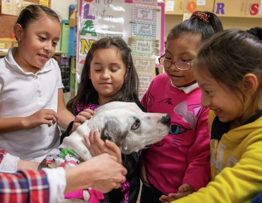 Second grade students at Lewis Elementary School in Spring ISD pet Layla, a rescue dog helping to teach students about character development through the Healing Species of Texas program. From left to right: Nicole Ayala, Allyson Moreno, Isabella Lopez-Venancio and Roselyn Zarceno. Photo: Courtesy Of Spring ISD / Submitted / SPRING ISD
