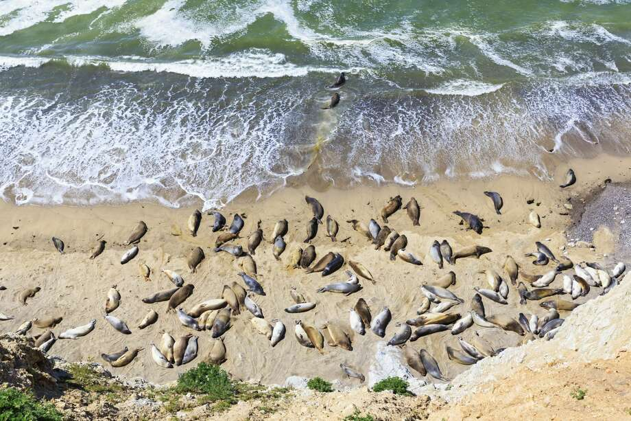 From elephant seals to clearer views, winter is the best season to visit Point Reyes. Here are our recommendations for how to spend a cozy weekend there. Photo: Getty Images