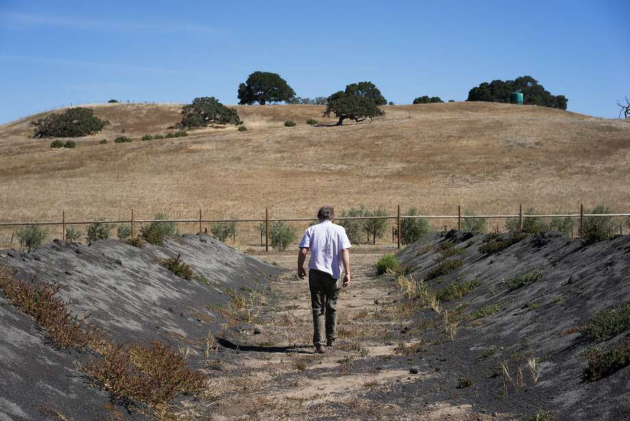 Randall Grahm walks through Popelochum Vineyard, where he is breeding grape varieties in hope of discovering a one perfectly suited to California soil. Photo: James Tensuan / Special To The Chronicle 2015