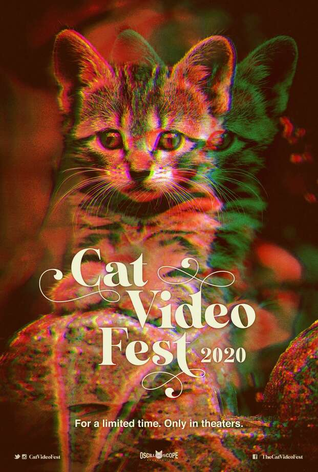 CatVideoFest2020 is coming to Stamford on February 22. Photo: CatVideoFest
