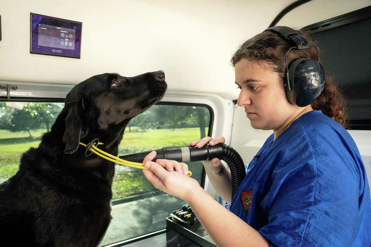 Nicole DeSanto, a groomer for Aussie Pet Mobile, dries Kobe in their work van in Daniel Island, S.C. on Jan. 9, 2020. Hiring for the final month of 2019 capped a year of steady but slowing gains in employment, the latest evidence that the American labor market has not run out of breath. (Cameron Pollack/The New York Times)