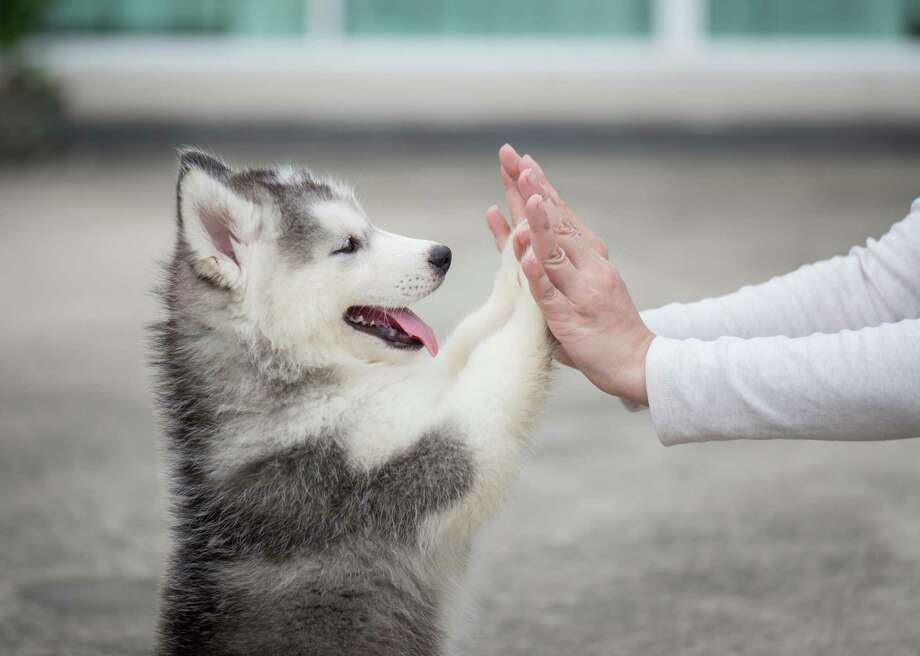 20 ways humans have shaped dogs' evolutionary history Photo: ANURAK PONGPATIMET // Shutterstock