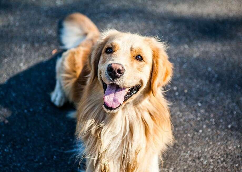 Most popular dog breeds that keep it quiet Photo: Pixabay