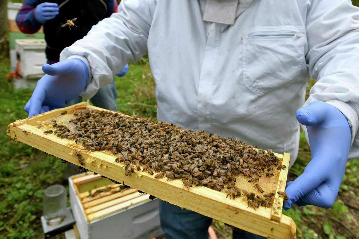 In this Oct. 12, 2018 file photo, a man holds a frame removed from a hive box covered with honey bees in Lansing, Mich.