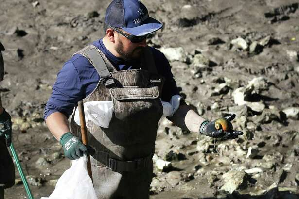 A worker for the San Antonio River Authority holds an Apple Snail, invasive to the area, during the draining of the San Antonio River for cleaning on Monday, Jan. 6.