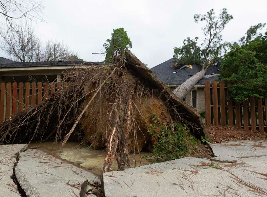 Thunderstorms brought strong winds that took down a tree, ripping up a portion of a driveway before landing on a nearby home on Drybrook Road, Saturday, Jan. 11, 2020, in Spring. Photo: Jason Fochtman, Houston Chronicle / Staff Photographer / Houston Chronicle © 2020