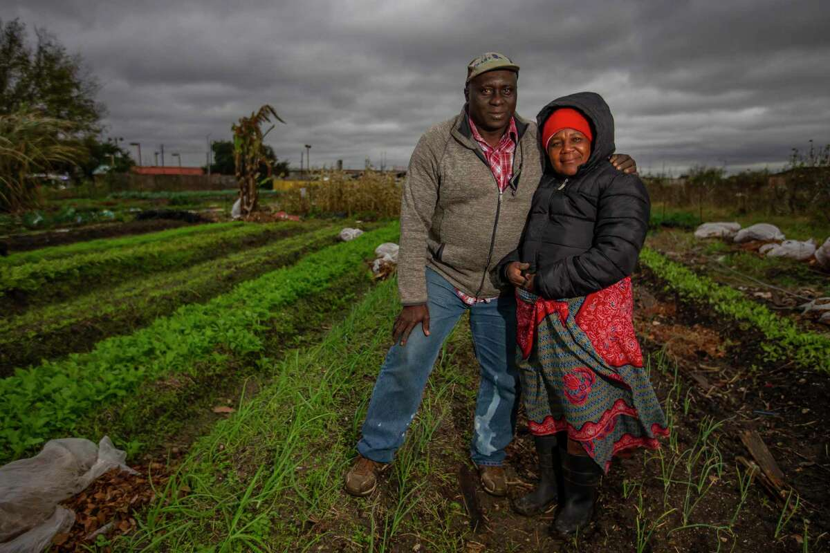 Toto and Fatuma Alimasi on their organic vegetable farm in Westbury. The Alimasis came to Houston as refugees from Congo. They farm everything from beets to sugar cane to corn on their Plant It Forward farm in southwest Houston.