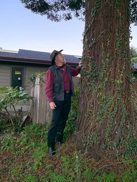 San Francisco Chronicle outdoors writer Tom Stienstra with redwood tree he planted 40 years ago and now more than six feet around