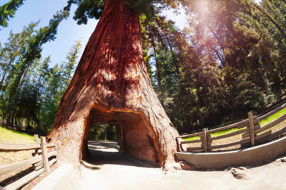 Redwood National and State Parks. Partly open. Reopened trail heads and parking lots as well as restrooms, though guests are advised to bring soap and hand sanitizer. Visitor centers and campgrounds remain closed.