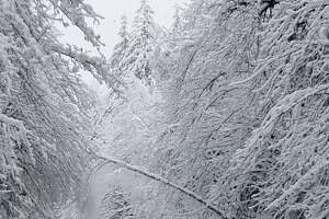 U.S. 2 between Gold Bar and Stevens Pass summit in both directions will remain closed until further notice because of downed trees and power lines, according to WSDOT.