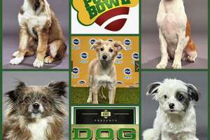 Danbury Animal Welfare Society will have five dogs playing in Animal Planet's Dog and Puppy Bowls on Super Bowl weekend.
