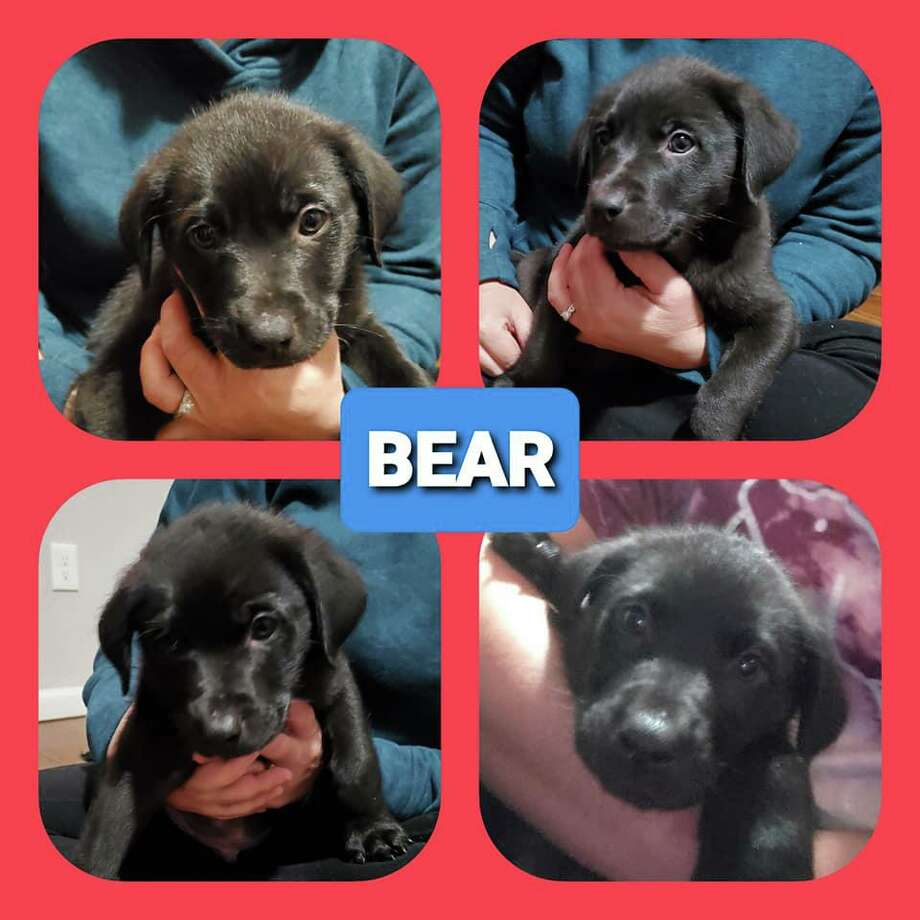 Bear Photo: Contributed Photo / Loyal Companion Animal Rescue