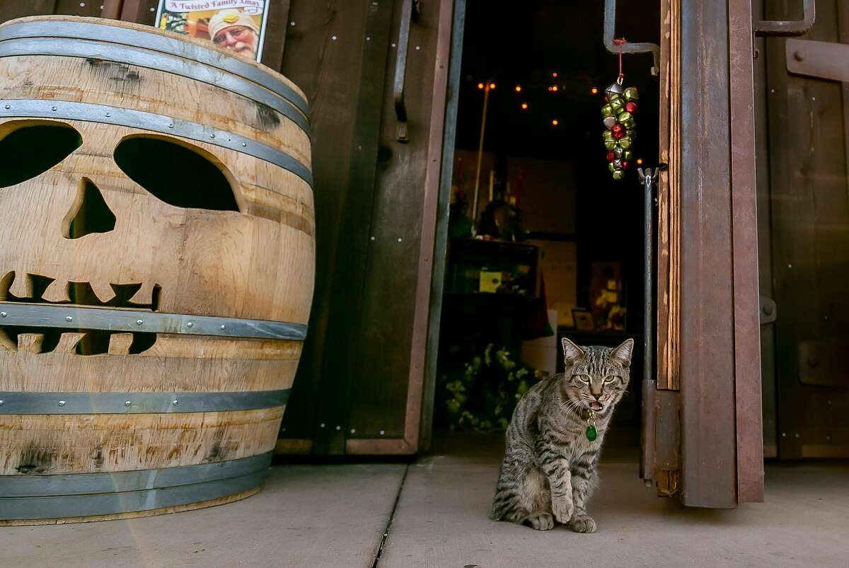 """""""Tank"""" the cat at the entrance to the Twisted Oak Winery tasting room in Murphys, Calif. is seen on November 22nd, 2019."""