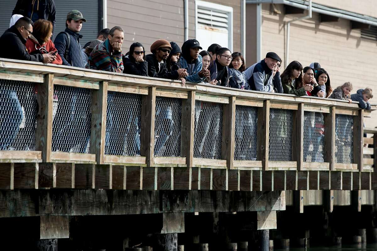 Tourists look on as sea lions lie on the K-dock of Pier 39 in San Francisco, Calif. Wednesday, Jan. 15, 2020.