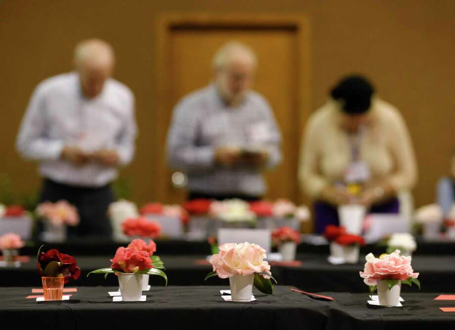 Judges rate Camellia japonica plants, also known as Japanese Camellia, during the Coushatta Camellia Society's annual flower show at Conroe's First Christian Church, Saturday, Jan. 18, 2020, in Conroe. Photo: Jason Fochtman, Houston Chronicle / Staff Photographer / 2020 ©  Houston Chronicle
