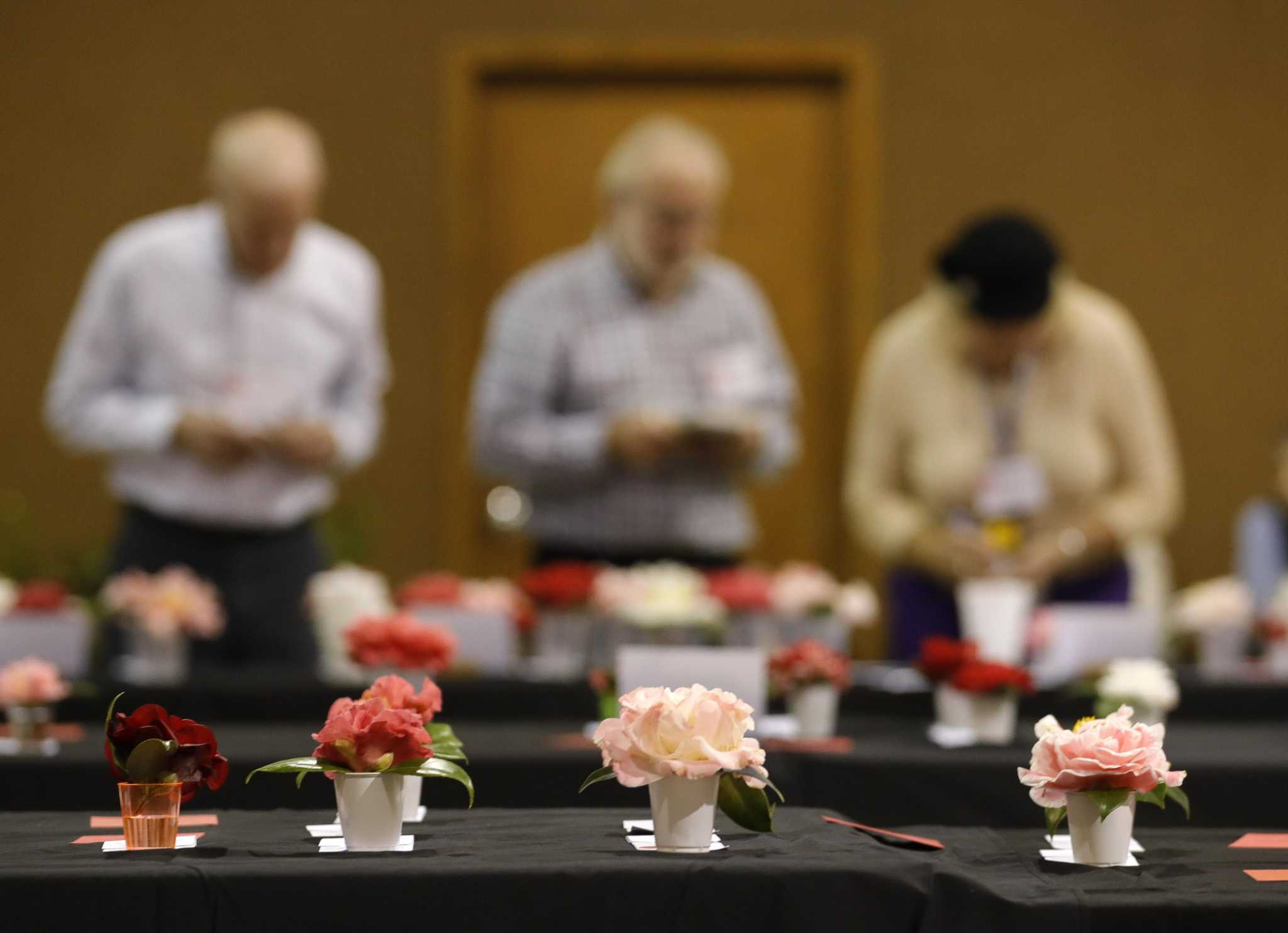 Conroe man enters about 100 Camellias at society's flower show