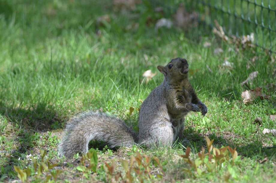 Squirrels are more active on fair weather days. (Michigan Department of Natural Resources/Courtesy Photo)