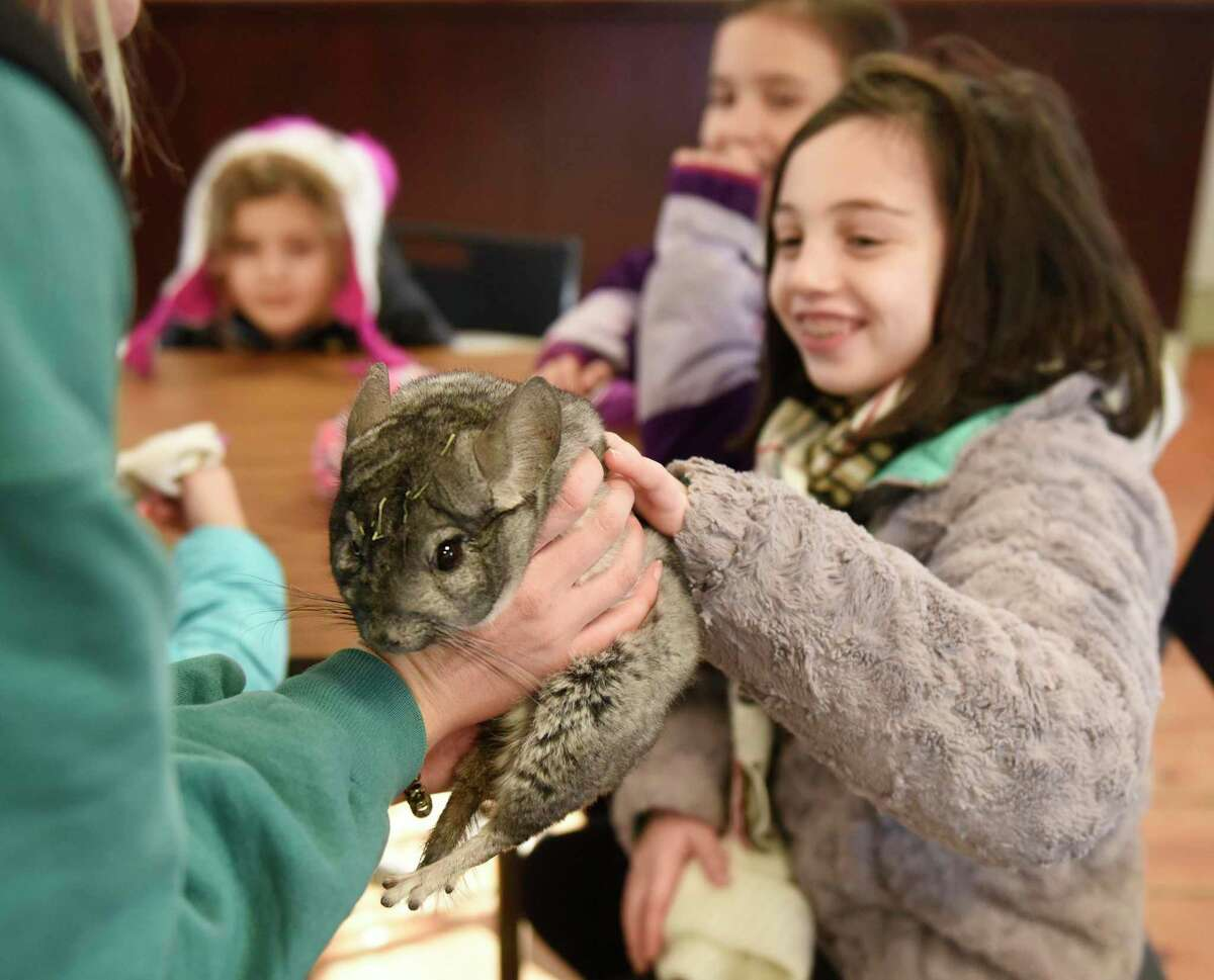 Environmental Educator Kelsey Kagel shows a chinchilla to guests at the WILDlife Wonders Break Out Day at Stamford Museum & Nature Center in Stamford, Conn. Monday, Jan. 20, 2020. A variety of programs celebrated the amazing diversity around the world while promoting the center's newest exhibit,