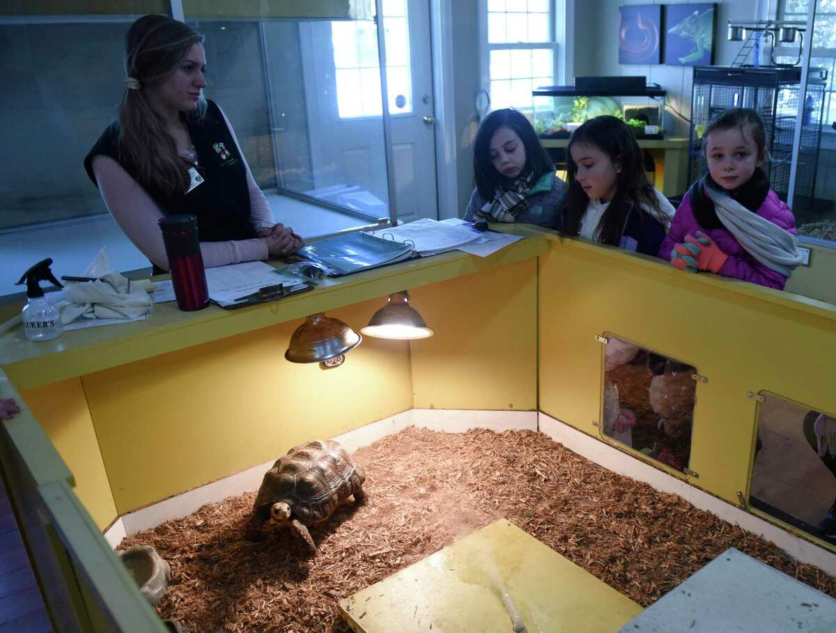 Visitors observe a red-footed tortoise during the WILDlife Wonders Break Out Day at Stamford Museum & Nature Center in Stamford, Conn. Monday, Jan. 20, 2020. A variety of programs celebrated the amazing diversity around the world while promoting the center's newest exhibit,