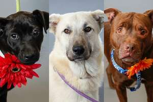 PHOTOS: Pets of the Week  BARC is full of loving animals that are eager to leave the shelter.    >>>See the shelter's adorable residents currently available for adoption here...