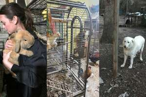 Houston SPCA staff rescued close to 200 animals from a Spring home that rescuers said was one of the most toxic environments they ever encountered.