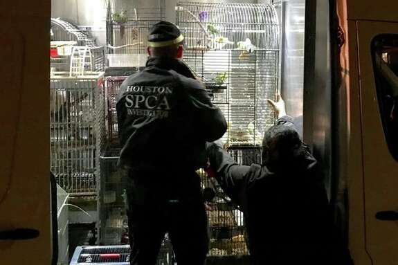 Authorities rescue 200 animals from a Spring home raid Tuesday,