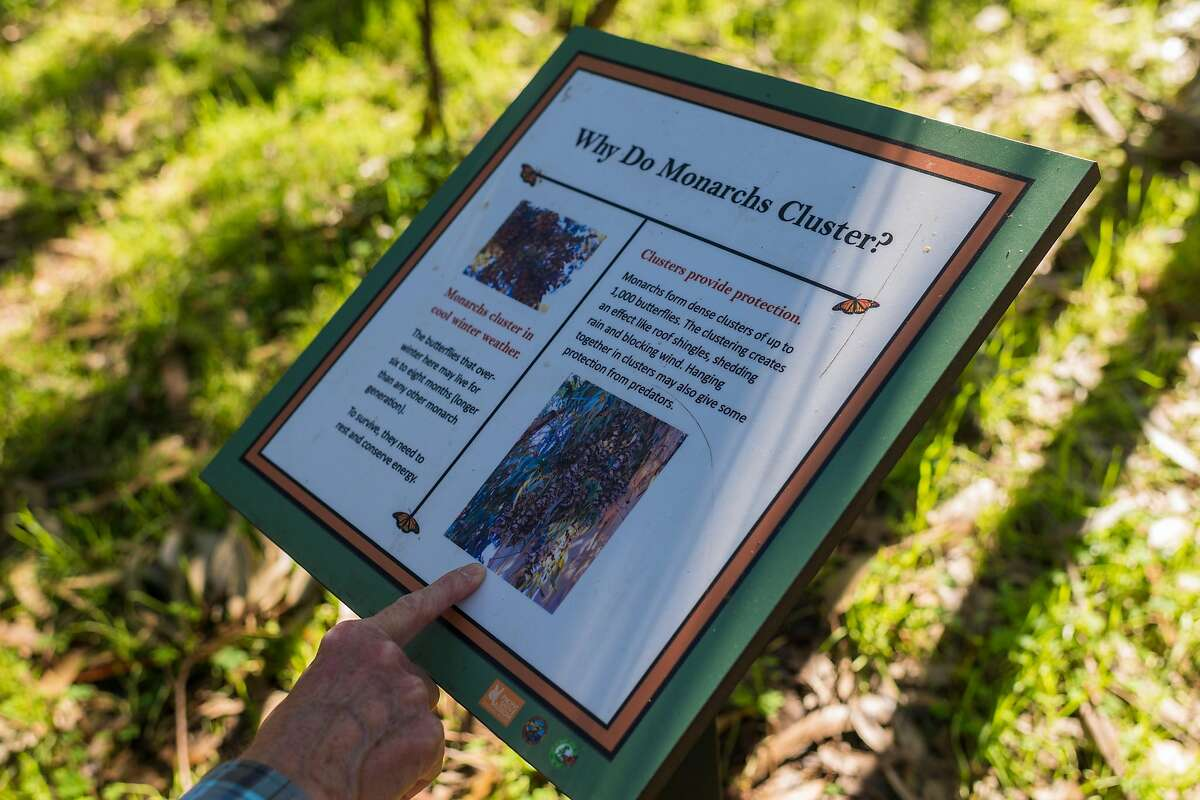 Peggy Naas of Chanhassen, MN reads an information sign at the Monarch Butterfly Sanctuary in Pacific Grove, Calif. on Jan. 23, 2020.