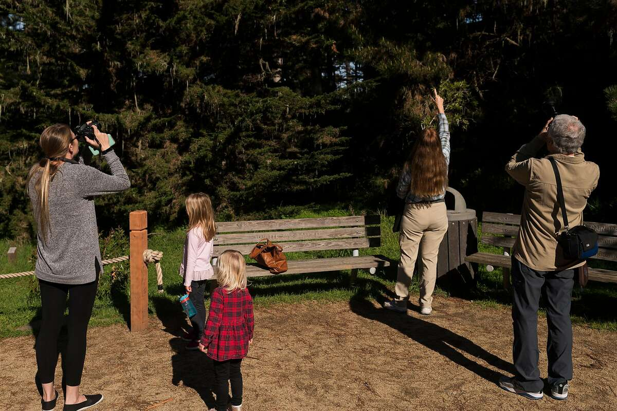 People look for butterflies at the Monarch Butterfly Sanctuary in Pacific Grove, Calif. on Jan. 23, 2020.