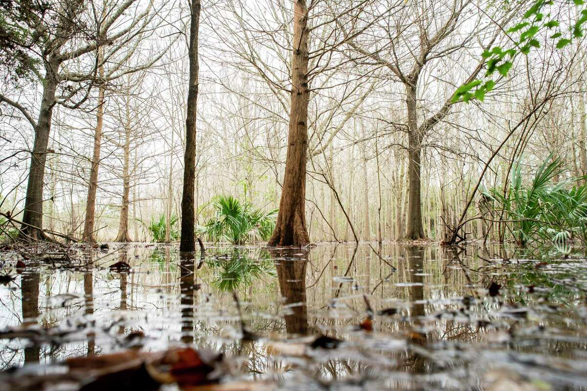"""Sites like the Pine Brook South Wetlands, a freshwater """"prairie pothole,"""" also serves as a public park, Thursday, Jan. 23, 2020, in Clear Lake. Obama administration-era clean water rules that helped protect areas such as """"prairie potholes"""" are being rolled back this week under the Trump administration."""