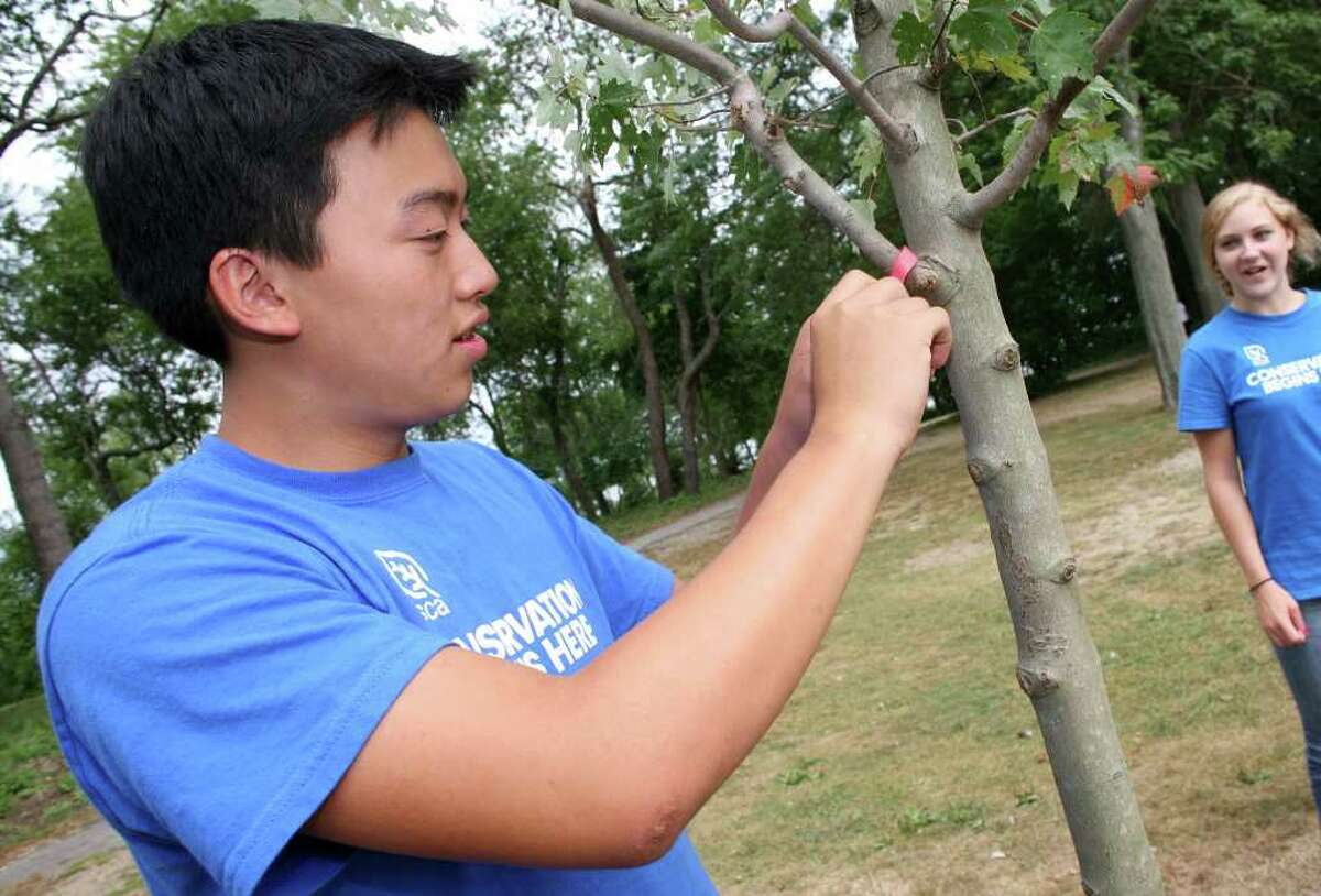 Student Conservation Association crew member Colin Ng checks on one of the trees they planted over the summer on Greenwich Point during the last day of the program Friday morning.