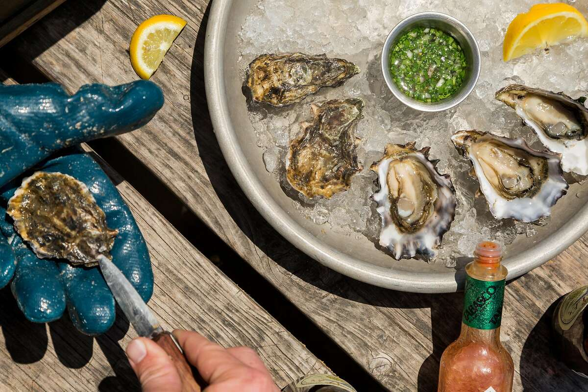 Ben Gore shucks raw oysters at Hog Island Oyster Company in Marshall, Calif., Saturday, May 23, 2015.