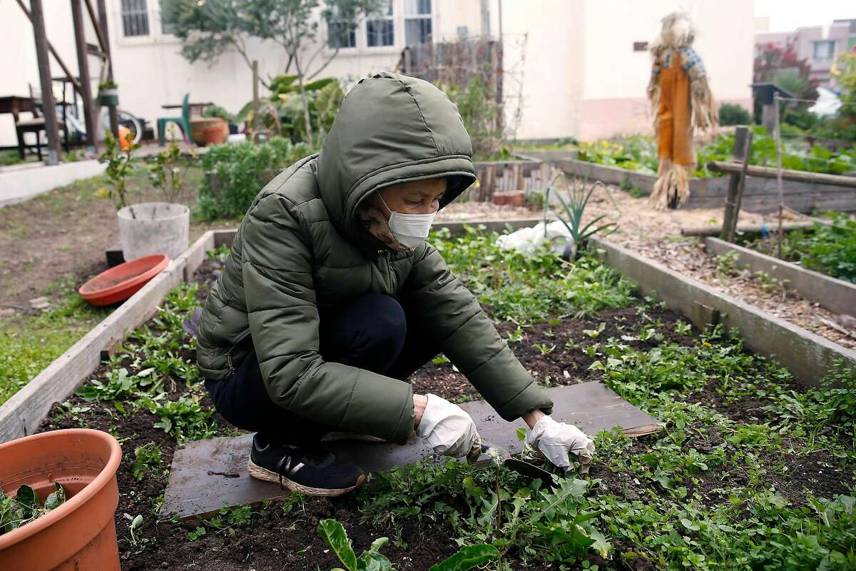 Grace Dalen of San Francisco works in a planter box she maintains at the Far Out West Community Garden at St. Paul's Presbyterian Church on Thursday, January 23, 2020 in San Francisco, Calif.