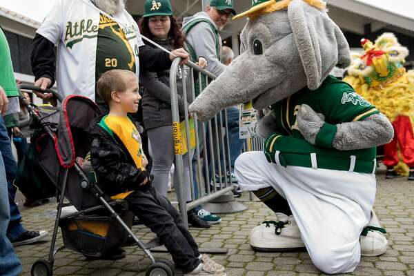 Bentley Wilson, 5, of Galt shows off his t-shirt depicting A's mascot Stomper while meeting him during the player's procession kicking off the Oakland A's Fan Fest held at Jack London Square in Oakland, Calif. Saturday, January 25, 2020.