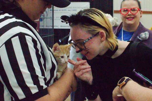 """Tiffany Guhlin checks out a kitten available for adoption at the """"Felines, Football, and Fun"""" Cat Show in Deer Park Saturday, Jan. 25."""