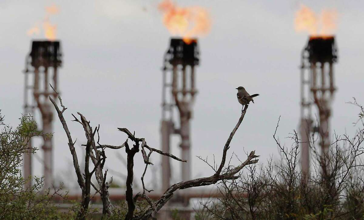 A bird rests on a tree branch as gas flares burn at Ritchie Farms, an oil lease in La Salle and Dimmit counties, operated by EP Energy E&P Company, L.P.