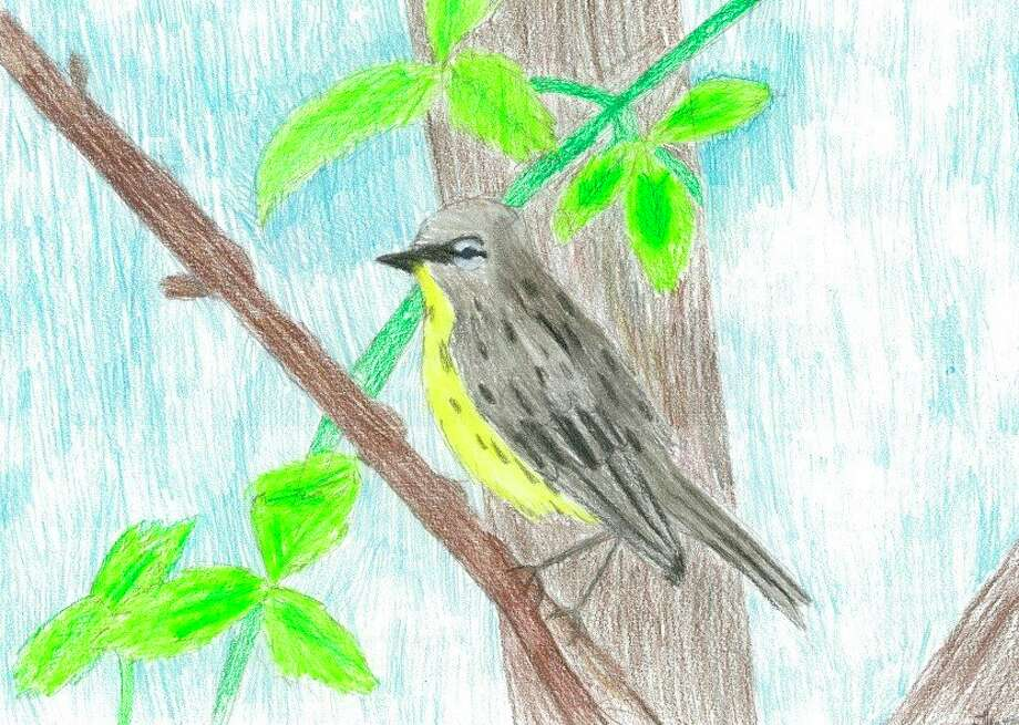 The 2019 Kirtland's Warbler Young Artists Contest winner was Tierney Hartman from Mr. Baker's fifth grade class at Grayling Elementary School. (Courtesy photo)
