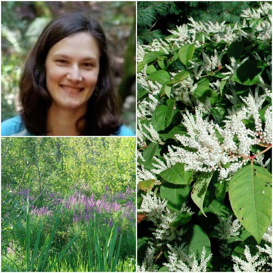 Katie Grzesiak will speak on Invasive Species in Gardens and on the horizon at the next meeting of the Master Gardener Association of Northwest Michigan. (Courtesy Photo)